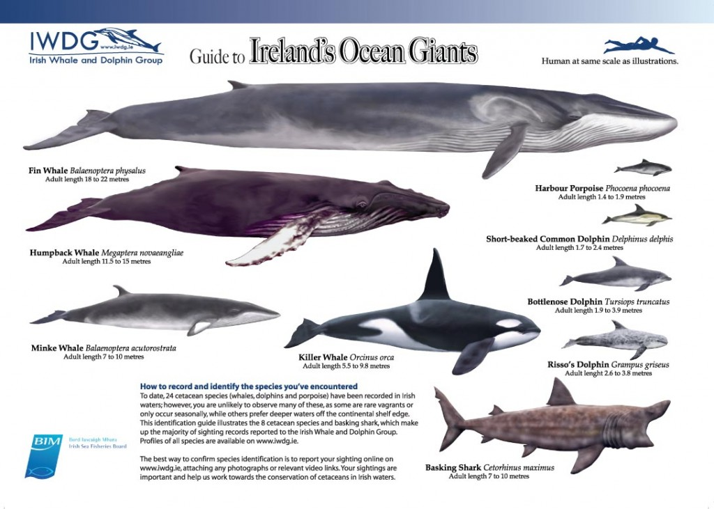 Guide to Ireland's Ocean Giants